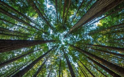 How Do Trees Grow In The Shade?